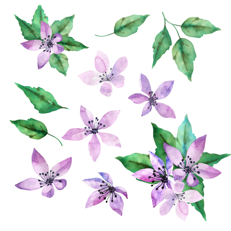 Spring design set with purple and blue flowers and green leaves in hand drawn watercolor style. Isolated on white background
