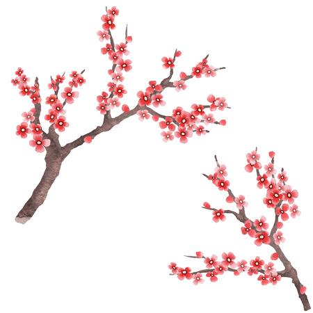 Sakura branches as design element. Spring sakura in hand drawn watercolor style. Flowering branch isolated on white background