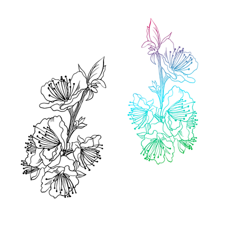Floral colorful sketch. Spring flowering branch as design element. Hand drawn spring flowers for greeting cards. Sweet aprocot vector illustration. Isolated on white background.