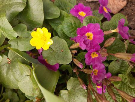 beautiful yellow flower summer spring