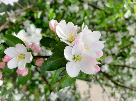 beautiful pink flowers spring sky