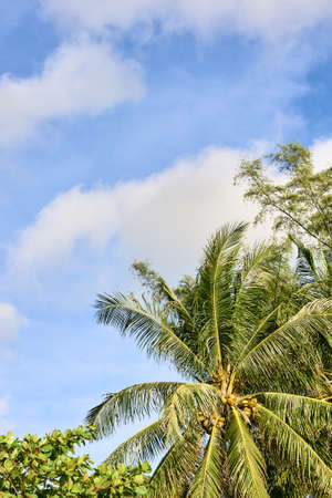Blue sky. Green palm trees on shore.