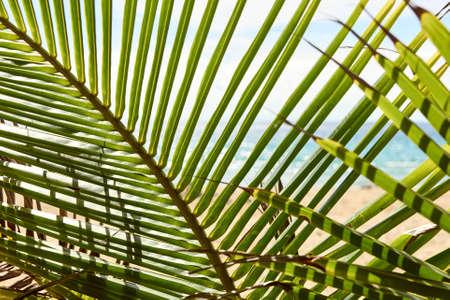 Green leaves palm tree. Sea shore.
