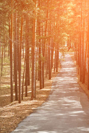 Road in forest. Nature landscape with sunbeam. Fall atmosphere. Sunset composition. Siberia woods. Ever green park. Magic wooden panorama. Hiking way Foto de archivo