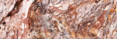 Pine tree texture. Cedar macro background. Wood nature surface. Abstract material design. Mediterranean grain. Firewood wallpaper