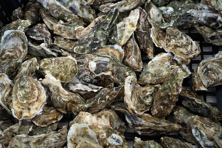 Closeup of oysters. Healthy food background. Top view. Stock Photo