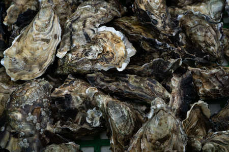 Closeup of oysters. Healthy food background. Top view.