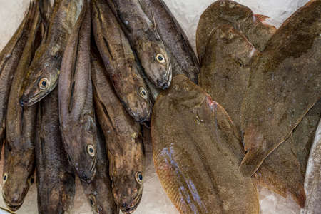 French fish market. Flounder and hake. Stock Photo