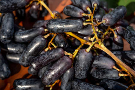 Ripe bunch of black grapes lady's fingers on a brown background. Macro close -up. Selective focus.