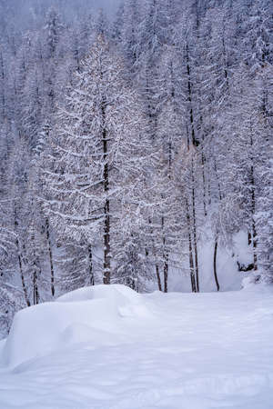 Soft focus. Pine tree branches with small cones in the mountain winter forest. Panoramic view of winter forest with trees covered snow. Sunset in the frozen mountains. High quality photo