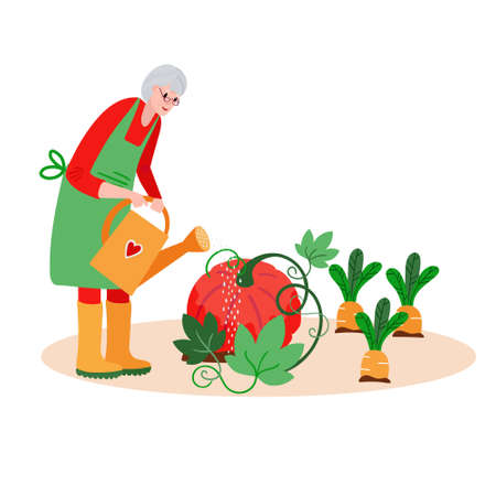 Senior Woman watering garden. Active Old farmer caring about pumpkin, carrots. Aged Retired harvesting in summer.