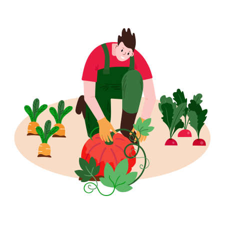 Farmer picking pumpkin in garden. Agriculture illustration with man and harvest. Male is sitting on ground with local organic crop.