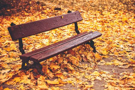privacy bench in an autumn park among yellow-orange leaves of trees