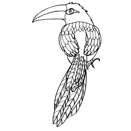 Vector hand drawn toucan. Hand drawing coloring book for children and adults.