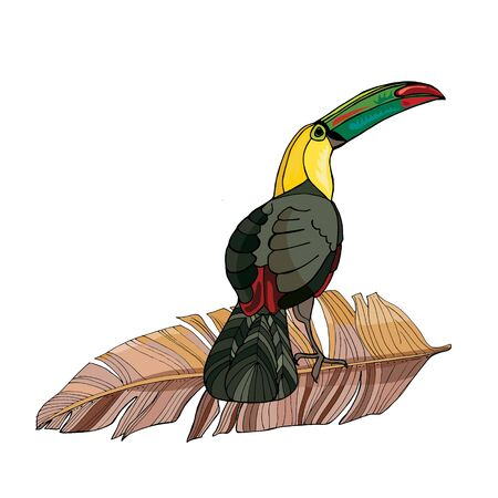 Vector composition of toucan and palm branches. Hand drawing coloring book for children and adults.