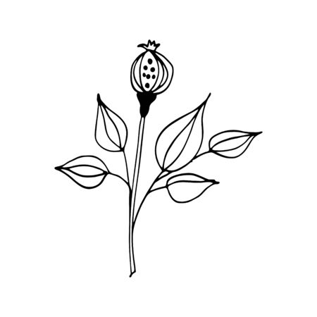 Colorful black and white pattern for coloring. Daisy flower illustration. Coloring pages for children and adults. Vector image. wedding decoration. Circuit.