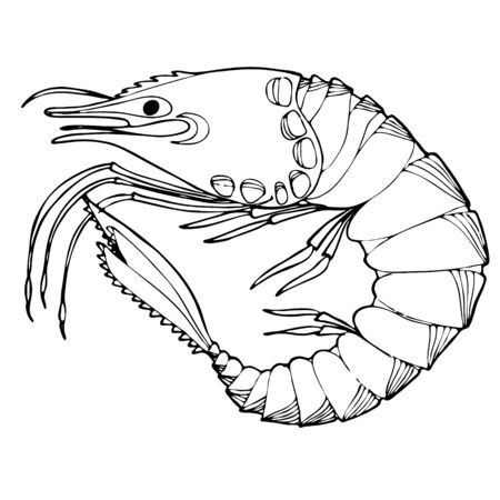Sea Shrimp Coloring Book. Hand drawing coloring book for children and adults. Beautiful drawings with patterns and small details. For anti-stress and children s coloring, emblems or tattoos. 向量圖像
