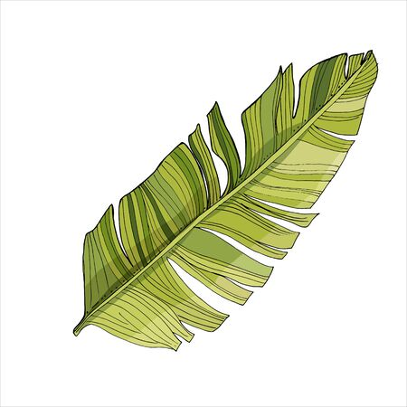 Tropical palm leaves, jungle leaf Isolated on white background. Vintage botanical illustration for decoration of clothes, stickers, swimwear, beach paraphernalia