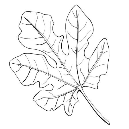 Tropical fig leaves. Black-white drawing on a white background. Botanical illustration. Coloring for children and antistress.