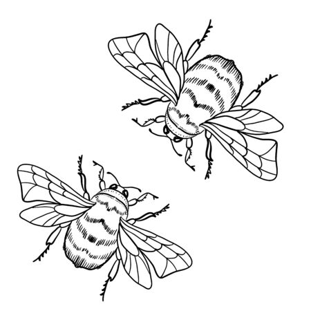 Cute cartoon bee, funny bee flying, vector illustration, coloring book page for children. Beautiful drawings with patterns. For anti-stress and children s coloring page, emblem or tattoo.