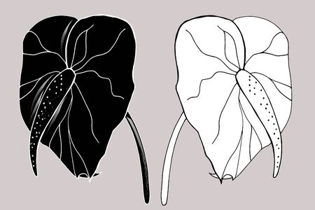 Calla Lily flowers, bud and leaves in black. Two tropical flowers isolated on a white background. Contour design elements with decorative calla lilies for summer design and coloring. Ilustrace