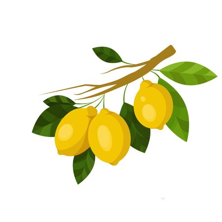 lemon branch. fruits illustration with lemon fruits, leaves and buds isolated on a white background. Food Design Element. Vector art Organic ripe yellow citrus. For stickers, gliders, recipes