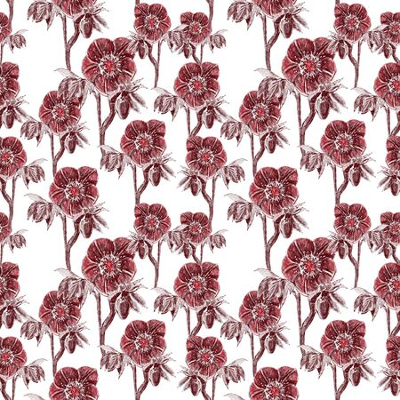 Seamless pattern. Hellebore Flower, bud and leaf. Floral design elements. Reklamní fotografie - 147973377