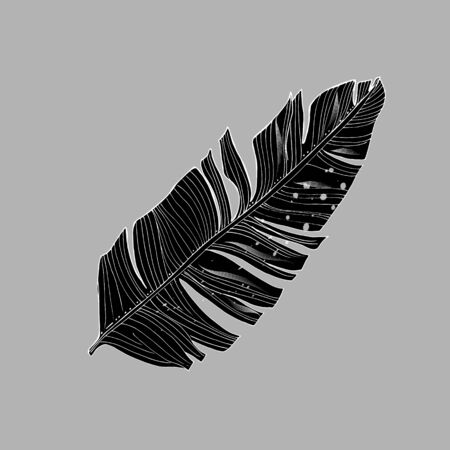 Tropical palm leaves, jungle leaf Isolated on white background.