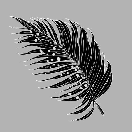 Vector palm leaves, jungle leaves isolated on white background. Palm Leaf Sketch.
