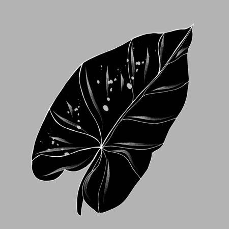 tropical leaf Nephthytis or Caladium Syngonium Podophyllum. Botanical illustration. Isolated on white. For the design of postcards, clothes, stationery, invitation cards. botanical sign, label.