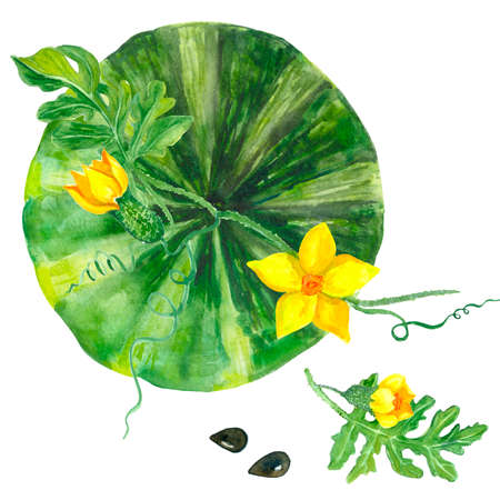 Bright watercolor watermelon in the garden with leaves and yellow flowers. Summer vacation and food. Watercolor. Organic, green. For the design of postcards, stickers, clothes, textiles, notebooks.