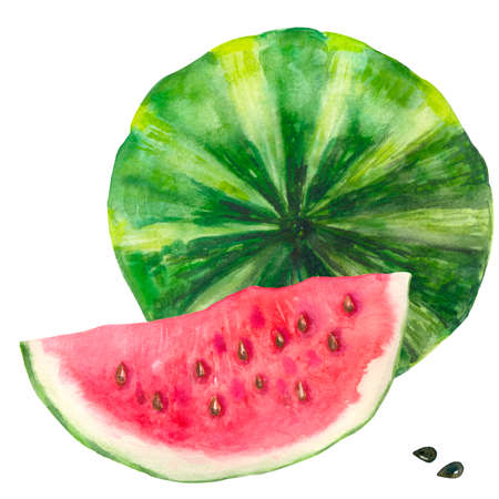 Bright watercolor watermelon. Slices and slices of red watermelon with seeds.