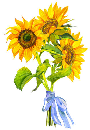 A bouquet of yellow sunflowers tied with a blue ribbon, watercolor on a white background. Sunlight, sun flower. For the design of stationery, textiles, clothing, pillows, stickers.