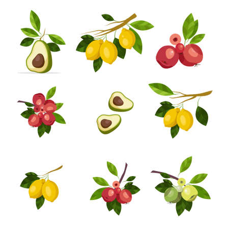Illustration of branches of green apples and yellow lemons, avocado with pitted fruits and leaves isolated on white background Ilustrace