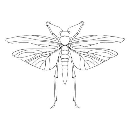 Detailed ornamental sketch of a moth,Hand drawn for adult anti stress.