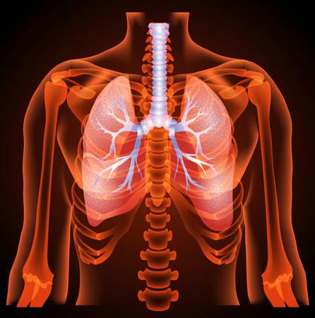 la struttura medica dei polmoni, anatomia, 3D, luce al neon