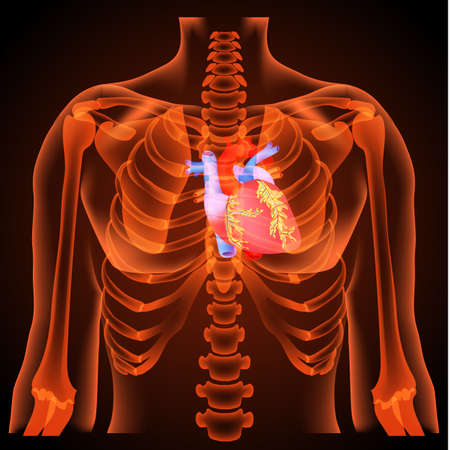 Medical structure of the heart,anatomy, 3D, neon light Vettoriali