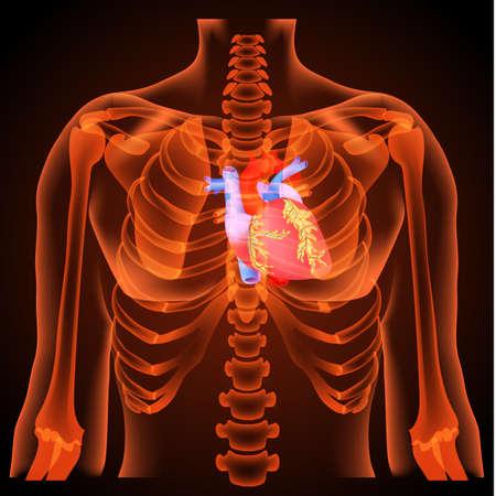 Medische structuur van het hart, anatomie, 3D, neonlicht