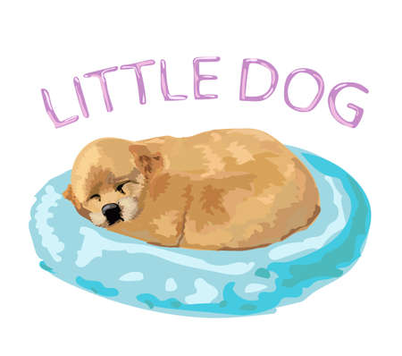 Cute redhead little puppy sleeping on a blue pillow, on an exalted white background