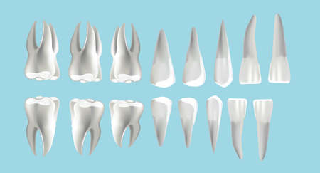 location and order of human teeth, types of dentist numbering