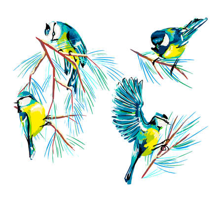 Vector illustration with the bird and the bird tit on white isolated background