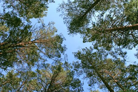 sky among the trees in the forest