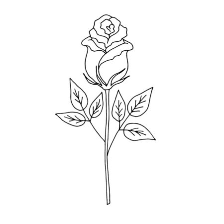 Deep contour rose flower with green leaves, sketch style vector illustration isolated on brown background. Hand drawn rose icon isolated on a white background. Realistic hand drawing of open rose, symbol of love, decoration element