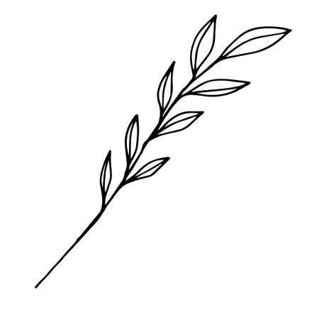 Sketch branch of leaves by hand on an isolated background. Hand drawn branches with leaves and flowers isolated on a white background.