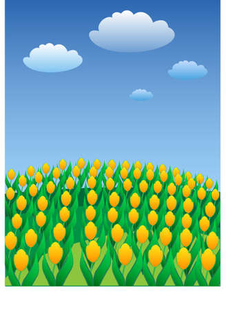 Yellow tulips on a background of the blue sky