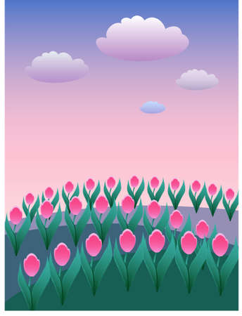 Field of pink tulips by daybreak Illustration