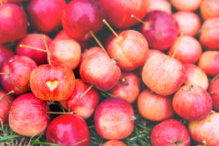 Background of many ripe red crab apples, one Apple has a heart cut out on it Фото со стока