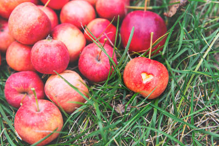 Many ripe red crab apples lie on the grass, and one Apple has a heart carved into it