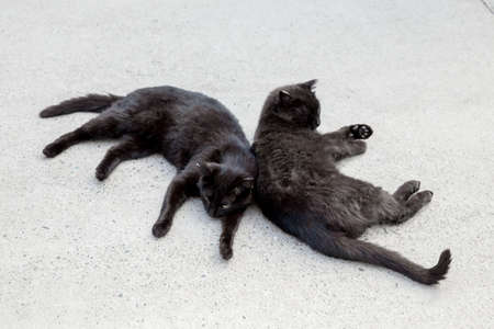 Black cat. Two Black cats sleep back to back on the concrete pavement outside.