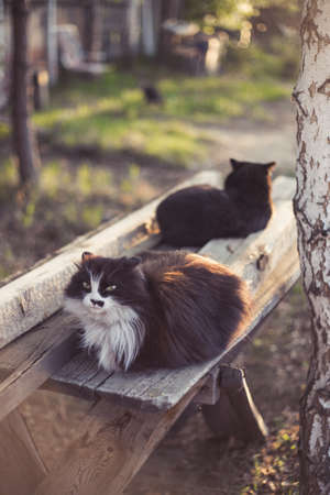 Black cats sit on a bench in the garden. Two cats